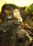 Chipmunk on the stump Stock Image