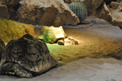 Chipmunk and tortoise. A chipmunk taking a nap together with a tortoise stock image