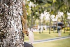 Chipmunk on tree, wild animal in tropics stock photo