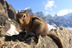Chipmunknahaufnahme auf einer Felsenklippe Lizenzfreies Stockfoto