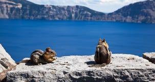 Chipmunks на озере кратер Стоковое фото RF