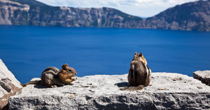 Chipmunks at Crater Lake Royalty Free Stock Photo