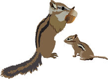 Chipmunks. Illustration of adult chipmunk with an infant chipmunk Royalty Free Stock Photo