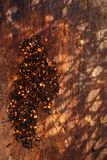 Chipotle - καπνισμένες jalapeno νιφάδες και κόκκινο τσίλι - καυτά τσίλι pep Στοκ εικόνες με δικαίωμα ελεύθερης χρήσης