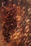 Chipotle - flocos fumado do pimentão do jalapeno e vitalidade encarnado dos pimentões Imagens de Stock Royalty Free