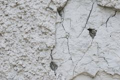 Chipped and cracked rough grungy texture of white plastered stone wall royalty free stock images