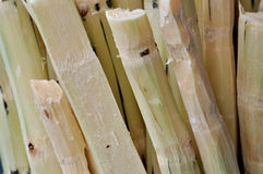 Chipped sugar cane in stack. Stack of chipped sugarcane, shown as featured background and texture in fresh fruit Royalty Free Stock Image