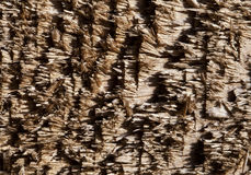 Chipped wood texture Royalty Free Stock Photography