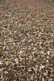 chippings деревянные Стоковое Изображение RF