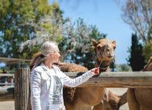 Chipre Larnaca Uma jovem mulher feliz que tenta alimentar um dromedário com palha em um parque do jardim zoológico Atração turíst imagens de stock royalty free