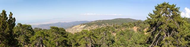 chipre Panorama de picos de montaña y de un pino negro creciente Fotos de archivo libres de regalías