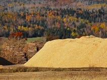 Chips Logs Sawdust Autumn Forest de madera Imágenes de archivo libres de regalías