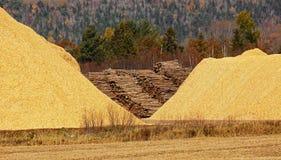 Chips Sawdust Pile Logs de madera Foto de archivo libre de regalías