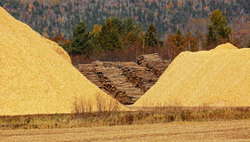 Chips Sawdust Pile Logs en bois photo libre de droits