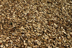Chips of wood. Wooden chippings, found on a playground royalty free stock photography
