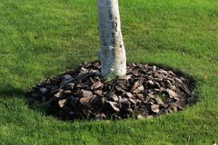 Chips of wooden bark used for mulching the ground around tree trunk Stock Photography