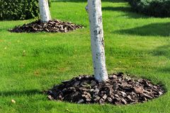 Chips of wooden bark used for mulching the tree trunk Stock Image