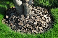 Chips of wooden bark used for mulching the tree trunk Royalty Free Stock Photos