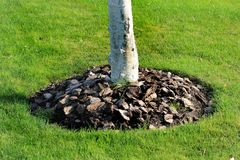 Chips of wooden bark used for mulching the tree trunk Stock Photos