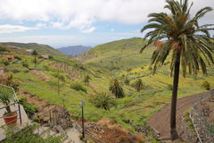 CHIPUDE,戈梅拉岛,西班牙:绿色风景和露台的领域从Chipude与一棵棕榈树在前景 免版税库存图片