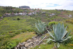 CHIPUDE, LA GOMERA, SPAIN: General view of the terraced fields of Chipude with Fortaleza mountain in the background and Aloe Vera. General view of the terraced stock photo