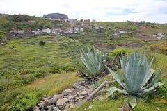 CHIPUDE, los angeles GOMERA, HISZPANIA: Ogólny widok tarasowaci pola Chipude z Fortaleza górą w tle Vera aloesie i Zdjęcie Stock