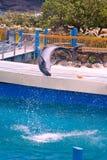 Chiquenaude de dauphin Photos libres de droits