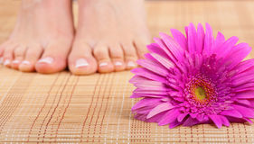Chiropody. Beautiful well-groomed feet with pedicure and pink flower. Focus on flower Stock Photography