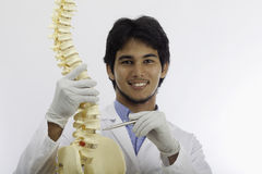 Chiropractic doctor Stock Image