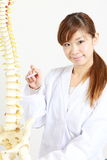 Chiropractor using a plastic model to explain Stock Images