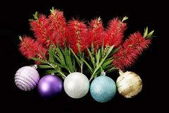 Chirstmas Baubles and Bottlebrush Flowers. On Black Background Stock Photo