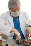 Chirurg oder Doktor mit einer Niere Lizenzfreies Stockfoto