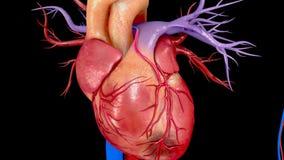 Chirurgie de greffe de pontage de l'artère coronaire illustration libre de droits
