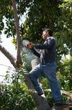 Chirurgien d'arbre avec la tronçonneuse Photos stock