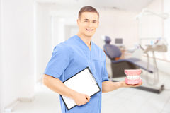 Chirurgien masculin de dentiste tenant des dentiers sur son lieu de travail Photographie stock libre de droits