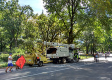 Chirurgiens d'arbre travaillant parmi des personnes appréciant le Central Park, New York City, Etats-Unis Photos stock
