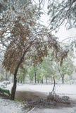Chisinau Moldavien - April 20, 2017: Trädfilialen med den gröna våren lämnar brutet vid tung snö, i sov- område Royaltyfria Bilder