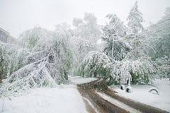 Chisinau Moldavien - April 20, 2017: Trädfilialen med den gröna våren lämnar brutet vid tung snö, i sov- område Arkivfoton