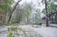 Chisinau Moldavien - April 20, 2017: Trädfilialen med den gröna våren lämnar brutet vid tung snö, i sov- område Royaltyfria Foton