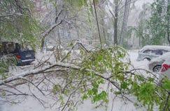 Chisinau Moldavien - April 20, 2017: Trädfilialen med den gröna våren lämnar brutet vid tung snö, i sov- område Royaltyfri Bild