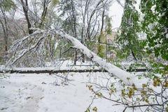 Chisinau Moldavien - April 20, 2017: Trädfilialen med den gröna våren lämnar brutet vid tung snö, i sov- område Royaltyfri Foto