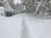 Heavy snowfall hits Chisinau in the middle of spring royalty free stock photo