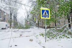 Chisinau, Republik von Moldau - 20. April 2017: Baumast mit den grünen Federblättern gebrochen durch starke Schneefälle, im Schla Stockbild