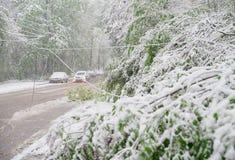 Chisinau, republika Moldova, Kwiecień - 20, 2017: Gałąź z zielonymi wiosna liśćmi łamającymi ciężkim śniegiem w dormitorium teren Zdjęcie Royalty Free