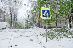 Chisinau, republika Moldova, Kwiecień - 20, 2017: Gałąź z zielonymi wiosna liśćmi łamającymi ciężkim śniegiem w dormitorium teren Obraz Stock