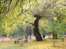Chisinaus Central Park. Lonely tree in central park in Chisinau. Autumn Landscape royalty free stock photo