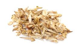 Chińskiego bielu herbata Fotografia Royalty Free