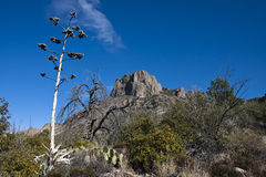 The Chisos Mountains in Big bend. View on the Pinnacle trail, Big bend National Park Stock Photos