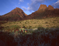 Chisos Mountains & Cactus Royalty Free Stock Image