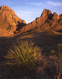 Chisos Mountains & Desert Plant (afternoonlight). The Chisos Mountains of Big Bend National Park in Texas with a desert plant in the foreground in the afternoon royalty free stock photography